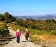 Douro Valley walking tour